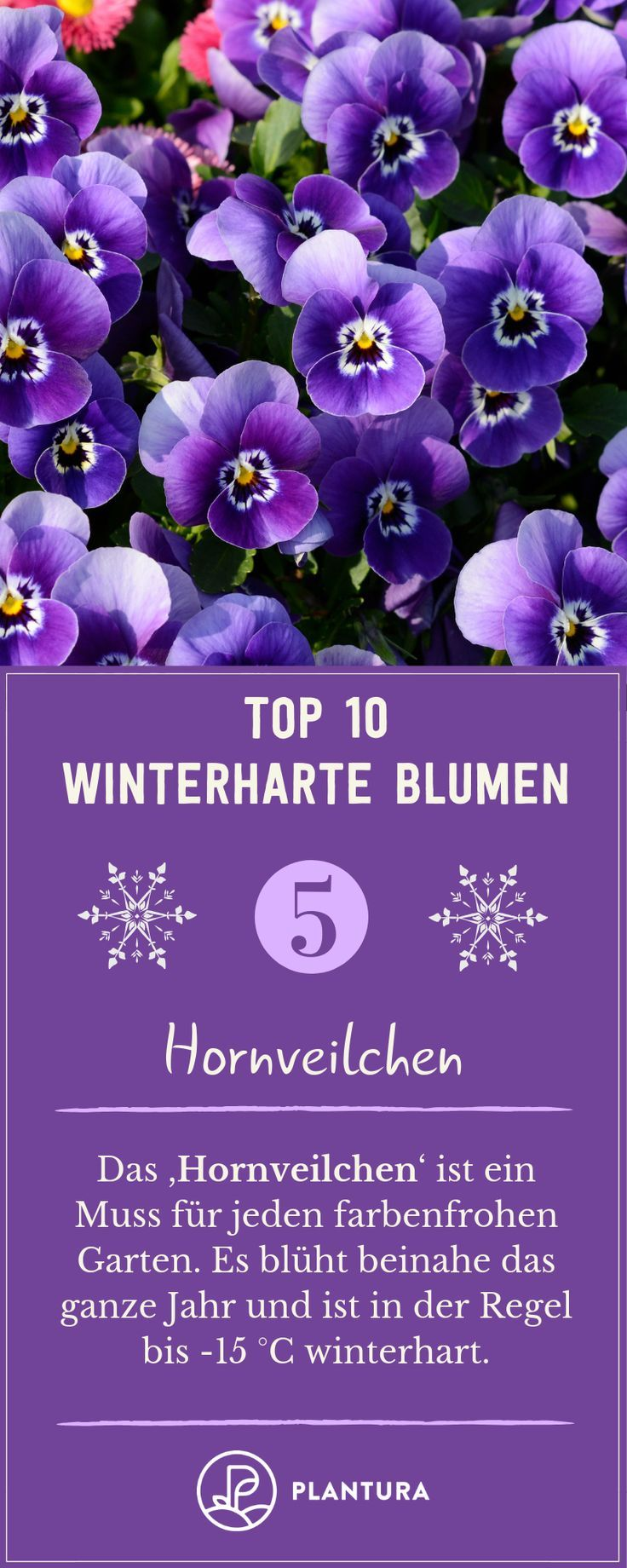 Winterharte Blumen: Die robusten Top 10 für Ihren Garten