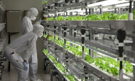 Panasonic, Toshiba and Fujitsu are among the electronics companies cultivating greens in indoor farms http://www.theguardian.com/sustainable-business/food-blog/2014/oct/23/salad-electronics-companies-indoor-farming