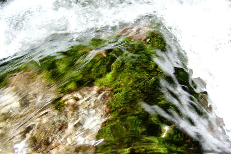 Water and moss stones in a river Metuje (east Bohemia)