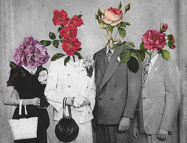 Roses: Inspiration, Flowers Families, Flowers Patterns, Pretty Things, Flowers Head, Collage, Art Flowers, Families Portraits, Flowerhead