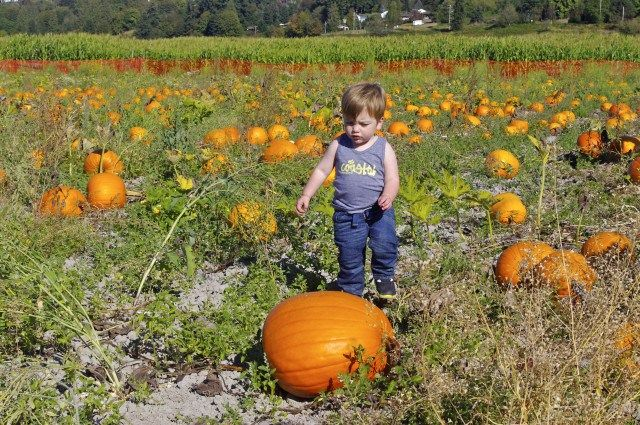 seattle pumpkin patch