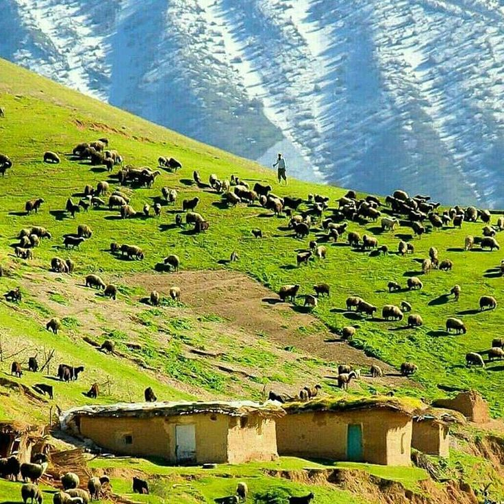 Koloy village, Sepid-dasht Region, Lorestan province, Iran (Persian: روستای کولوی ،بخش سپید دشت ،استان لرستان) Photo by: Kami Dolatshah