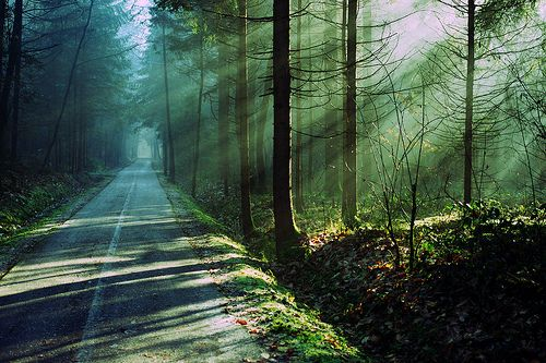 roadLights, The Roads, Inspiration, Quotes, Greater Things, Dark Forests, Travel, Nature Beautiful, Fit Motivation