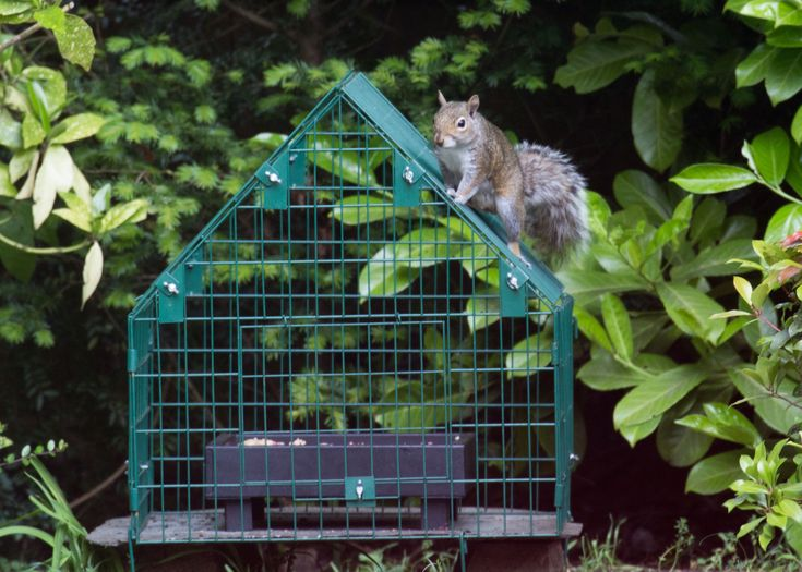 anti squirrel bird feeders
