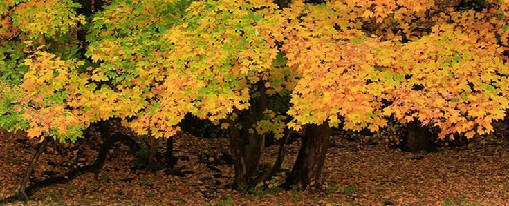 Autumn colours in Macetown, NZ