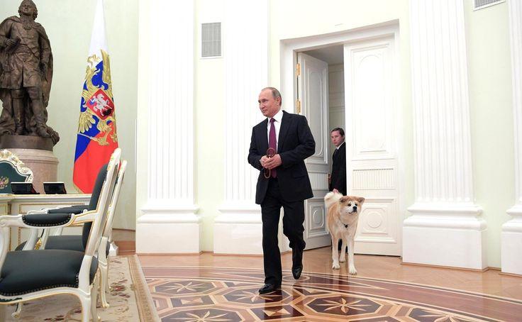 Президент России Владимир Путин в начале интервью с журналистами японских СМИ показал собаку породы акита-ину по кличке Юмэ, которую Россия получила в подарок в 2012 году. По словам Путина, это строгая собака, которая всегда защищает хозяина.