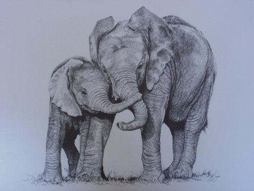 baby and mom elephant - Google Search