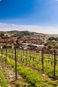 Fad, fashion or formidable, these are the questions that always surround the wine of Gavi | http://www.winesdirect.co.uk/wine/by-country/italy/piedmont/gavi/ #Gavi #Wine