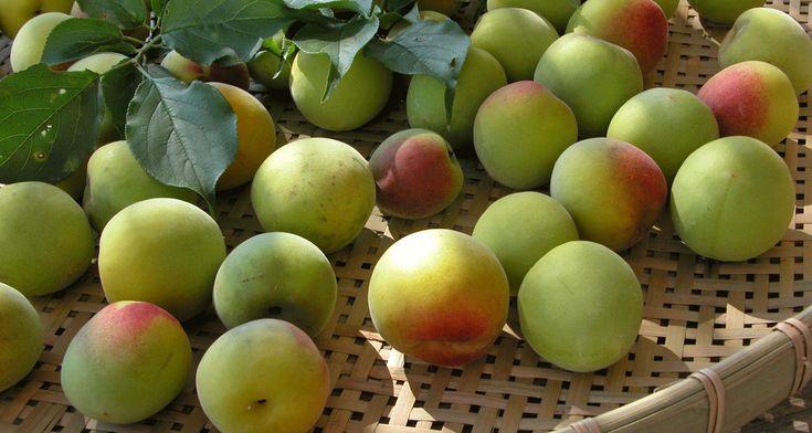 梅には、収穫する時期や梅実の特性により、それぞれに適した用途(利用法)があります。楽しい梅仕事に役立てていただければ、幸いです。