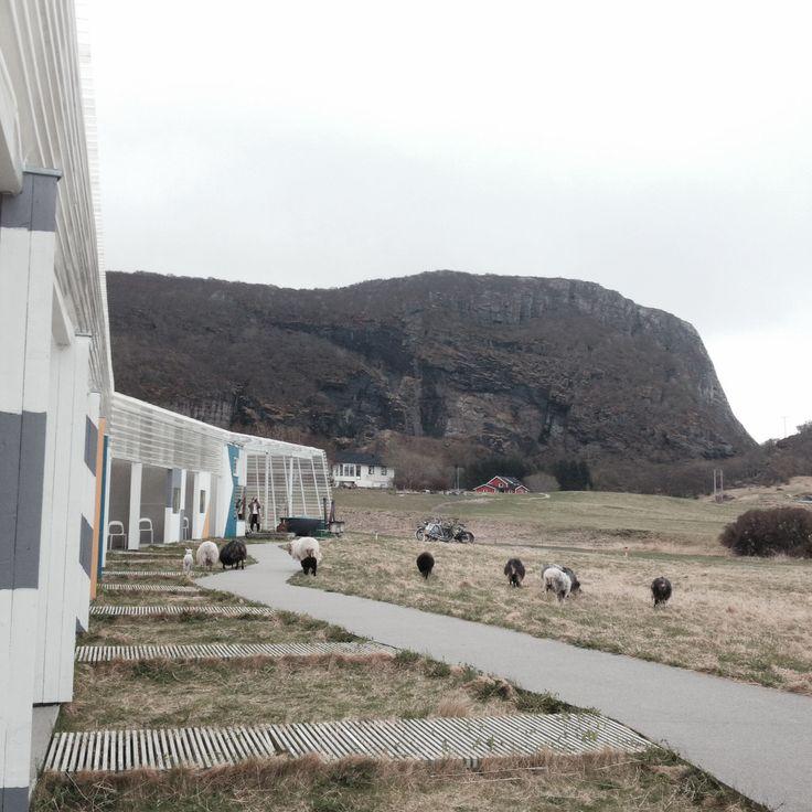 Cool hotell. Stokkøya.