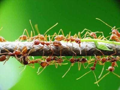 ant's