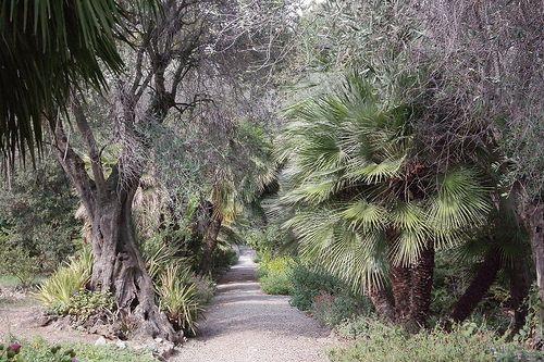 Giardini Botanici Hanbury-76