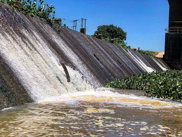 Tragic break in connectivity of Mhlatuze River strands these fish below it #aquatics #richardsbay #mhlatuze #catfish #fish