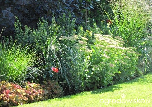 Pokażę nasz ogród - strona 296 - Forum ogrodnicze - Ogrodowisko