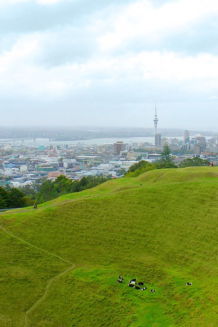 Mount Eden, (Maungawhau, the 'Mountain of the Whau tree' in Māori) is the name of a scoria cone and surrounding suburb in Auckland, New Zealand. Photo of Mt Eden crater overlooking Auckland by CLRgraphics. #MountEden #Auckland #NewZealand #volcanoes http://www.teara.govt.nz/en/photograph/8706/mt-eden