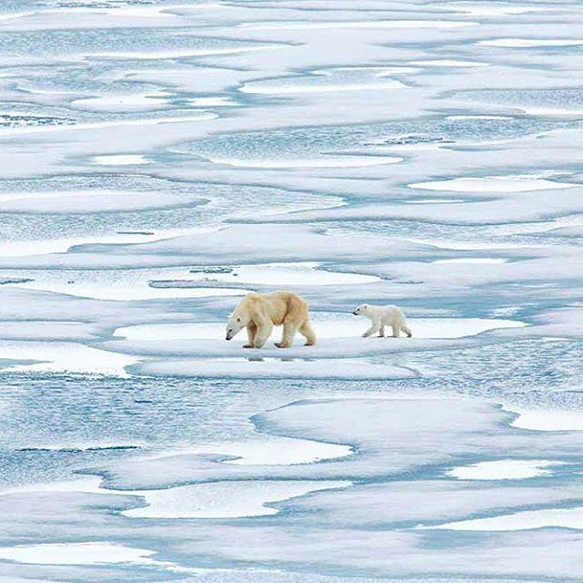 """ozcanyuksek: """" Kaybolan Kuzey Ve Kutup Ayıları Magma Temmuz sayısı kapağını kaleme aldım. Gezegen için diyoruz ki #birşeyyap """""""