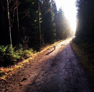 Walk in peace, today, everyday, together. / Vandra i fred, idag, varje dag, tillsammans. Lena Losciale. Sweden.