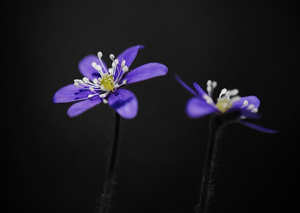 Flowers photography art - prints for sale