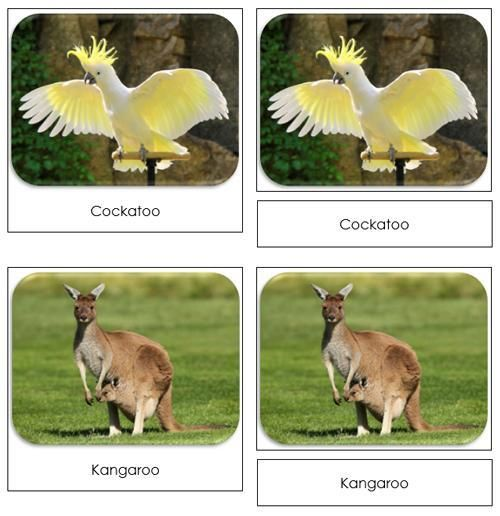 The Land Down Under Safari Toob Cards - printable cards by Montessori Print Shop