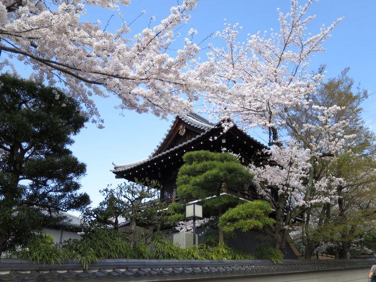 Beautiful cherry blossom :)