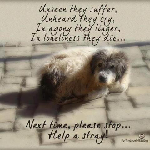 Strays have no choice at being homeless.