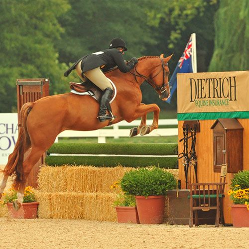 2168 best Show Jumping/ Dressage/ Cross-Country/ Vaulting ...