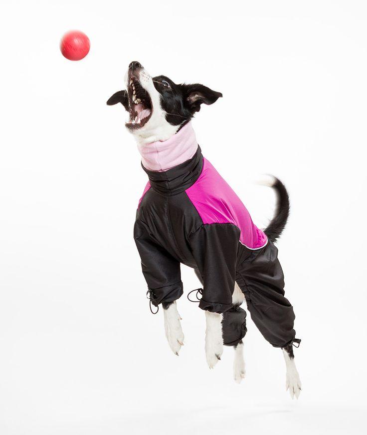 Bélelt kutya overál - Kutyaruha