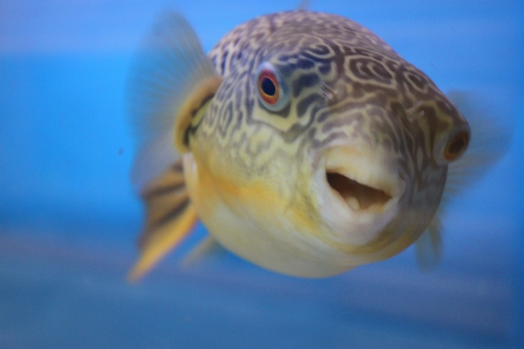 Coldwater fish | Stratford Garden Centre » Even More Reason to Visit…