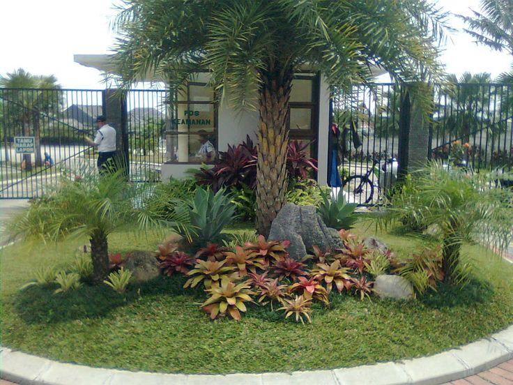 Palms landscape ideas