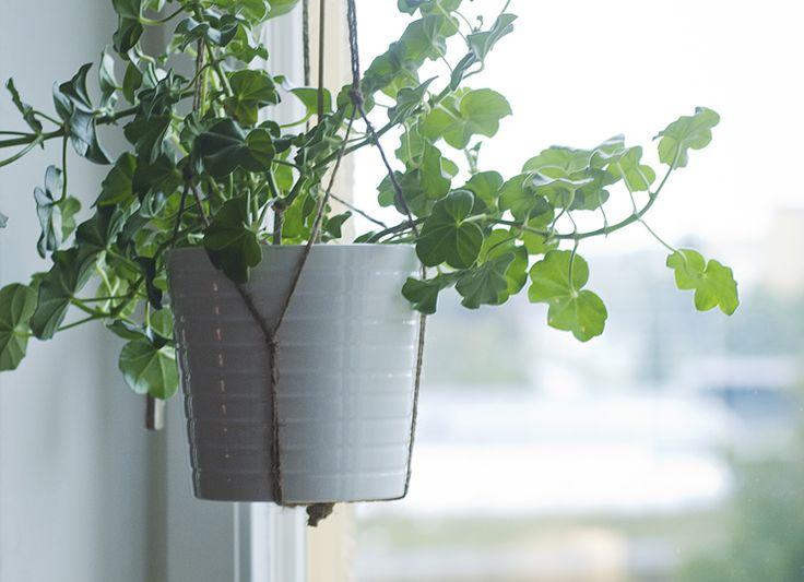Jag har länge letat efter snygga ampelkrukor att hänga i mina fönster, men utan att lyckas. Så var jag hemma hos en vän som hade gjort en egen lösning med en vanlig kruka och ett rejält snöre. Insp…