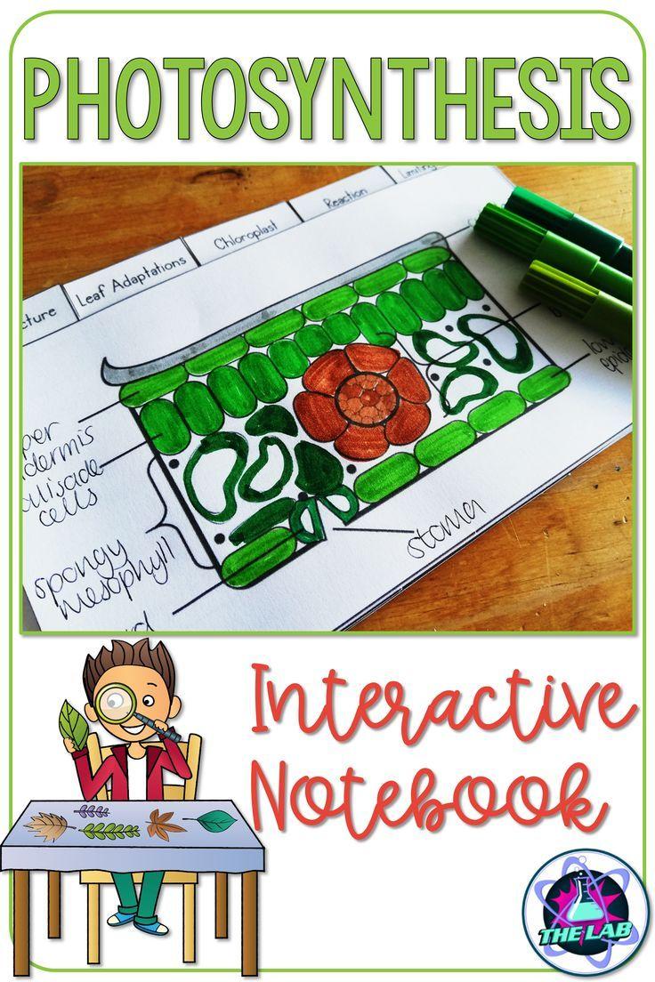 Photosynthesis Interactive Notebook Activity   Interactive ...