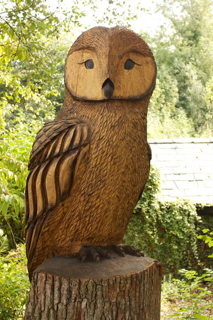 1000 images about carved owls on pinterest wood for Owl fish store