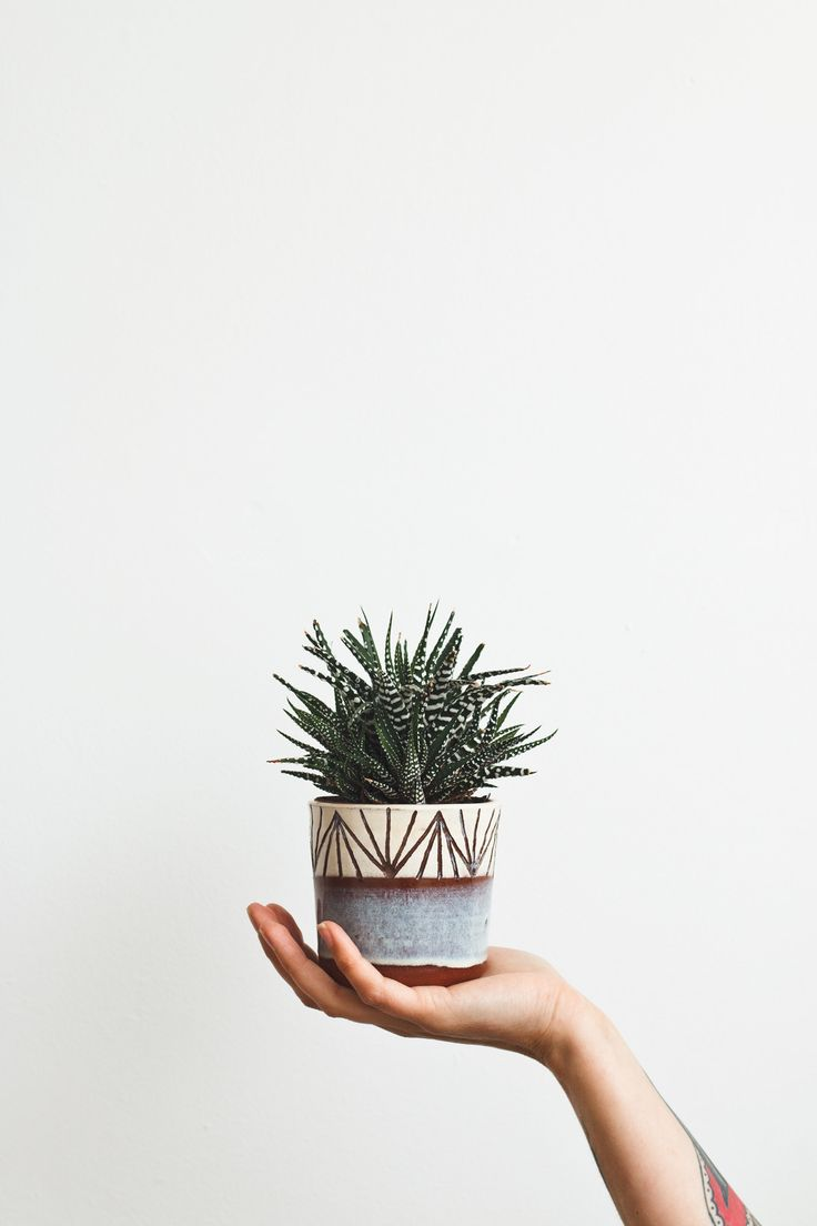 Plant Lovers x x