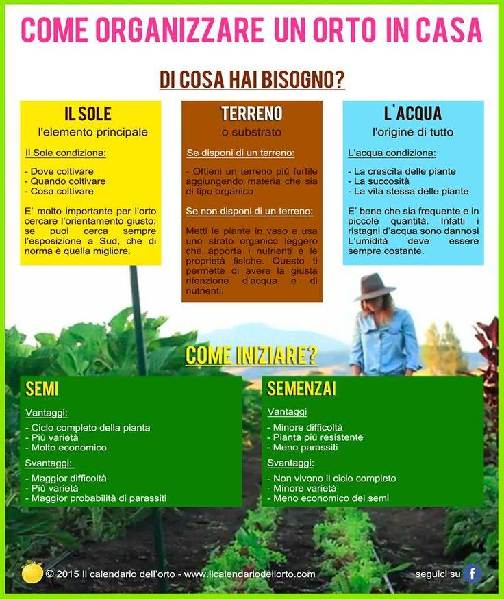 Come organizzare un orto in casa