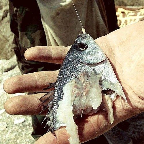 L'attacco di un Pesce Serra