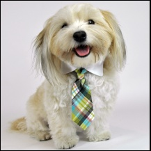doggie in a tie...adorable: Dogs Accessories, Dogs Bows, Dogs Stuff, Bows Ties, Plaid Dogs, Parties Plaid, Dogs Necktie, Wedding Dogs, House Parties