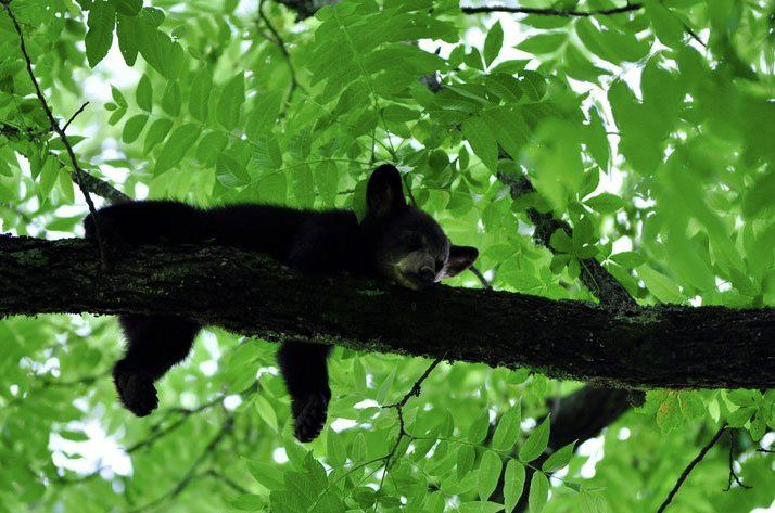 80 Best Images About Smoky Mountain Wildlife On Pinterest