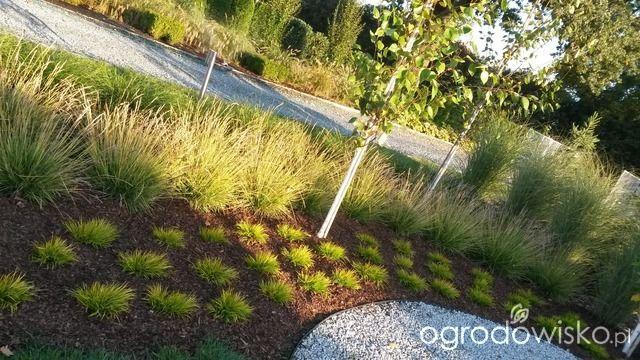 DUŻY OGRÓD małej ogrodniczki 1 - strona 696 - Forum ogrodnicze - Ogrodowisko
