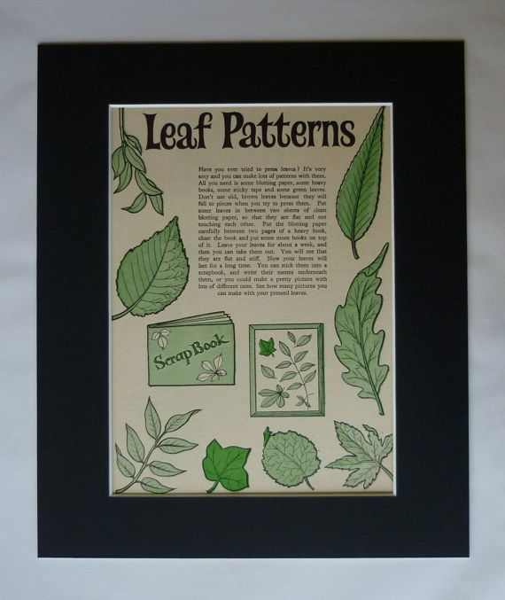 Vintage mounted print of Leaf Patterns. Available framed. Date printed: 1962. Condition: excellent. Type of print: line block, printed on heavy matt paper. Mount: black, to fit frame size 12 x 10. All our prints are professionally matted and backed to fit a standard size frame.