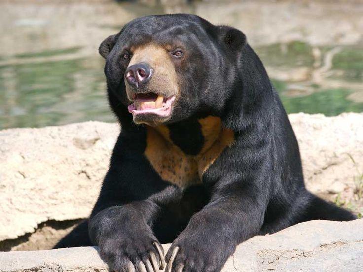 Sloth Bear Sanctuaries in Rajasthan, India @ Sanctuariesindia.com