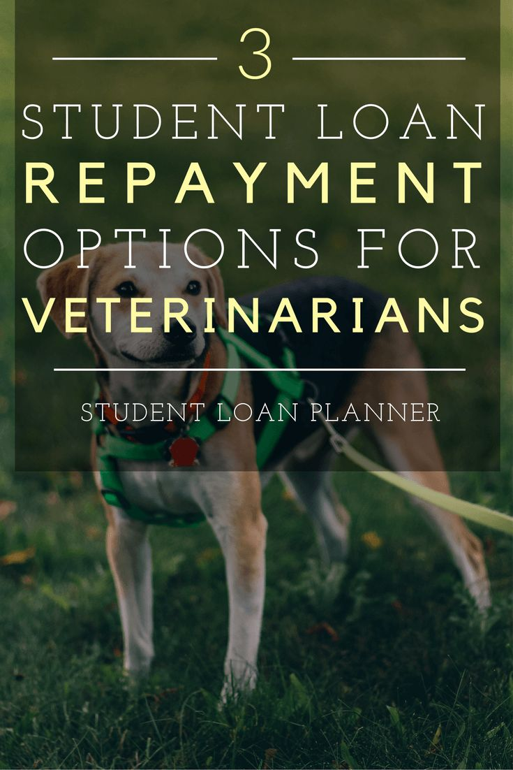 Student Loan Repayment Choices for Veterinarians. How veterinarians can pay back student loans well. Veterinary school loans