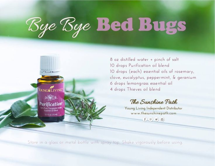 Spearmint Bed Bug