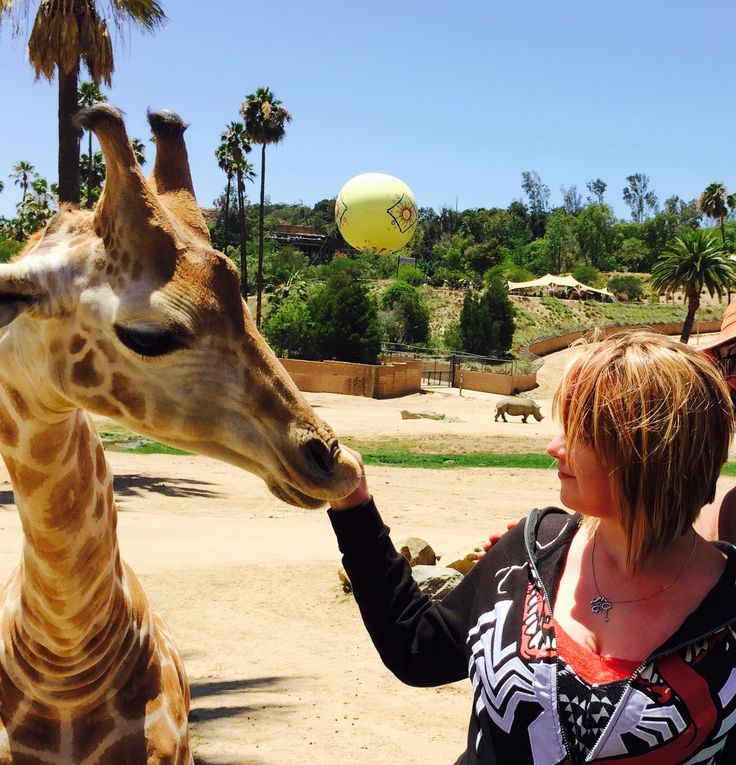 Wild Animal Park, Escondido, United States Feeding the Giraffe with Rhino and Hot air Balloon in the background. Photo credit Sarah McNeal.