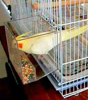 Tidy Seed No-Mess Bird Feeder (SMALL) parrot toy toys breeder canary cockatiel finch: Pet Supplies