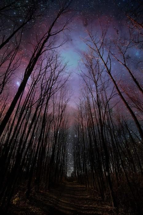 purple: Forests, Starry Sky, Night Photography, Night Skiing, Starry Night, Stars, Beautiful, Trees, Night Sky