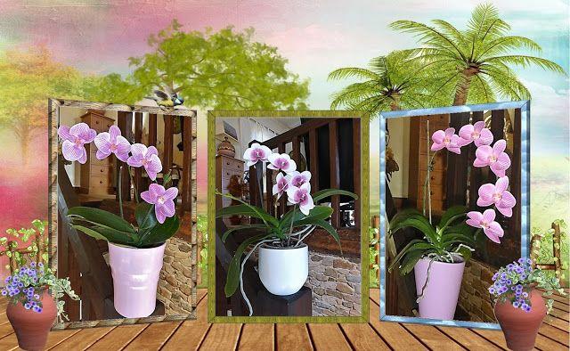Les mains dans la tête: Fabriquer des orchidées en papier