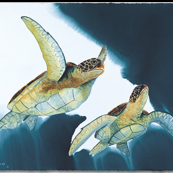 Wyland Turtles