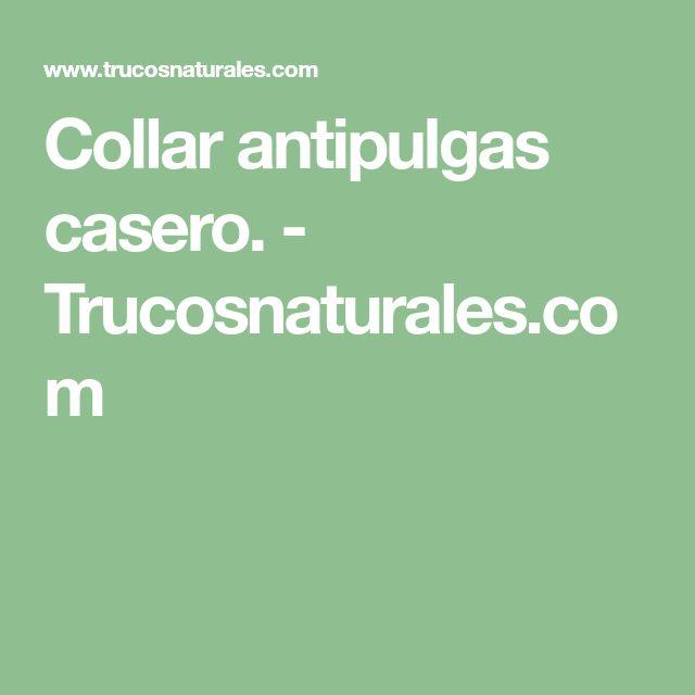 Collar antipulgas casero. - Trucosnaturales.com