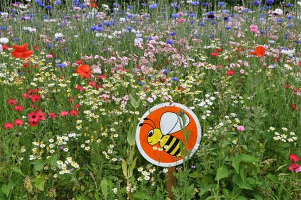 Monmouthshire County Council replaces 85 per cent of bedding with Euroflor meadow flower mixes | Horticulture Week