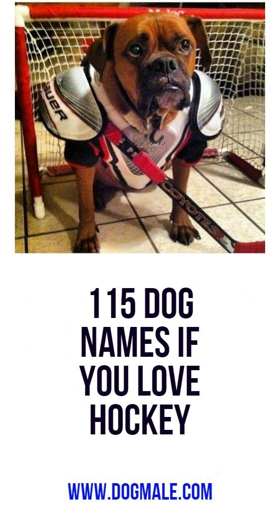 115 Dog Names If You Love Hockey Dog Names Dogs Cool Pet Names